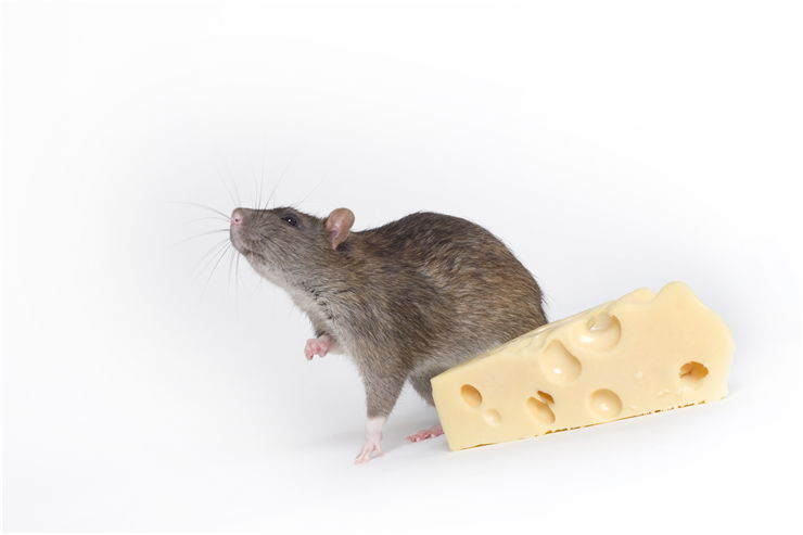 Picture Of Mouse And Cheese